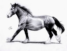 Horse Gait: Canter by ManiaAdun