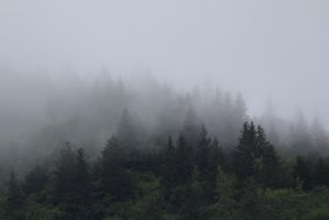 Fog by athenaowl1999
