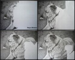Dog, process by yatanya