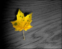 Autumn Leaves Wallpaper 2 by KWilliamsPhoto