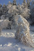Frost and sun1 by Hudojnica