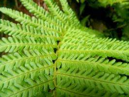 Fern by Ionday