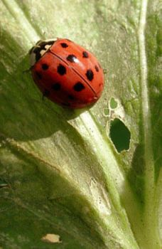 LadyBug Directions 1st place by FixMyPic