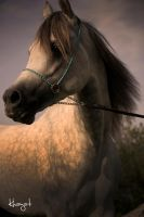 Princess's Horse III by Ibrahim-K