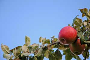 Apples against the sky by LucieG-Stock
