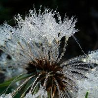 More dew - more drops by amisiux