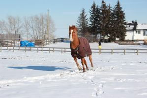 Blanketed horse running through snow 3 by eluhfunt-stock