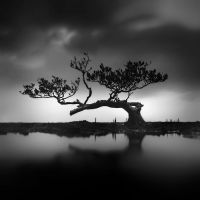 Mangrove - Tree of Life by Hengki24