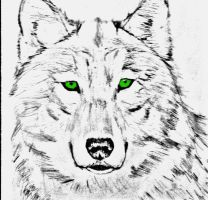 Green eyed wolf by Coolguywhoscold