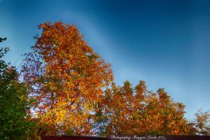 The colors of autumn. Hungary.2013. HDR. by magyarilaszlo