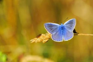Blue Butterfly by pohlmannmark