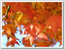 Fall Colors 3 by worldtraveler08