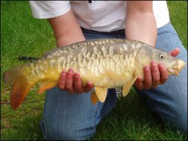 May 23rd - Mirror Carp by parry