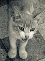Stray by Youcef07