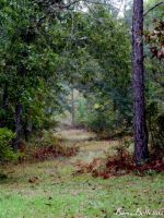Path through the woods by BamaBelle2012