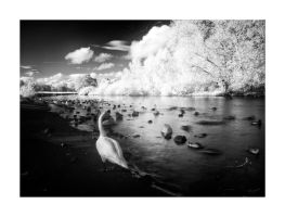 White Swan II - IR by Wayman