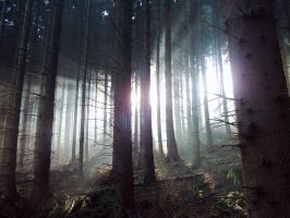 Mighty Forest II by Zarathustra666