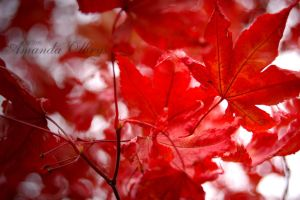 red leaves4 by firstkissfeelings