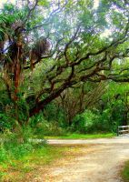 Path to Fort Matanzas by sheishere