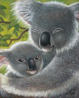 Koala Cuddle by CAMartin