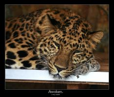Awoken. by FSGPhotography