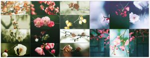 The plum blossomx70p by LeEight