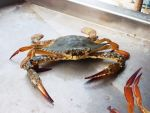 Crab 02 by Sky-Master-Stock