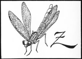Dragonfly ACEO by meihua