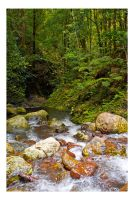 Coomera Creek by Cameron-Jung
