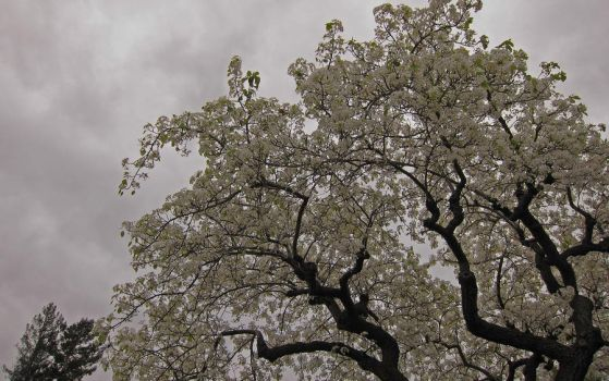 Gloomy Blossoms by Leitmotif