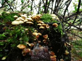 mushrooms 2014 25 by harrietbaxter