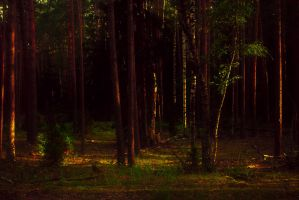 Evening in the woods by Anna-Belash