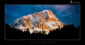 out of the trees by dfm63