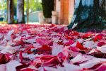 Fallen Leaves by BuuckPhotography