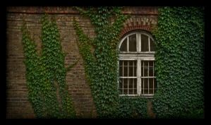 Ivy Wall by O-r-c-h-i-d-e-a