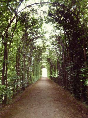 Vine Tunnel by Ninelyn