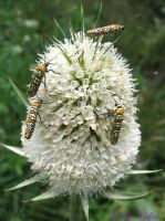Four Buggies on A Teasle by Lithe-Fider