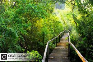 Visit Cat Tien National Park with Vietnam Airlines by AloTrip