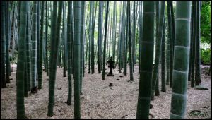 Bamboo Forest by Eclipseo