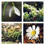 First signs of spring. by abloom