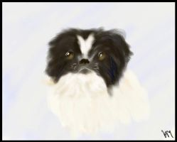Pippa the Japanese Chin by SilkenWebs