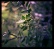 Tea Tree by pixi3angeldreamx