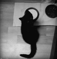 little CAT. by Browsemaster