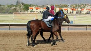 Racehorse Stock 18 by Rejects-Stock