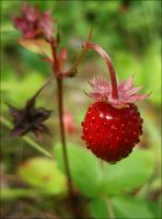 Wild strawberry by Irkaaa