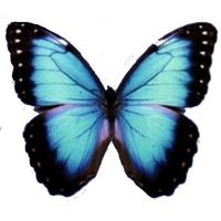 Butterfly PNG by MyPluginbaby13