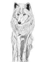 Rough Wolf Sketch by Maddie-Marie