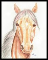 Equine in Watercolor by SharysAogail