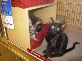 Petsmart's Kitties 26 by BigMac1212
