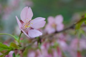 Pink flowers by andreym24